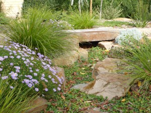 Dry creek bed with Dichondra repens.