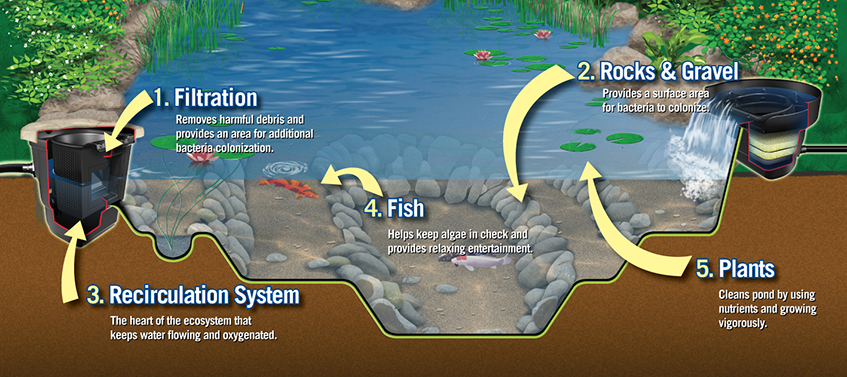 Components of an ecosystem pond