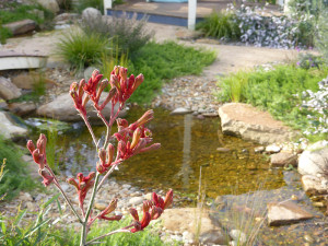 Lysterfield creek with kangaroo paw