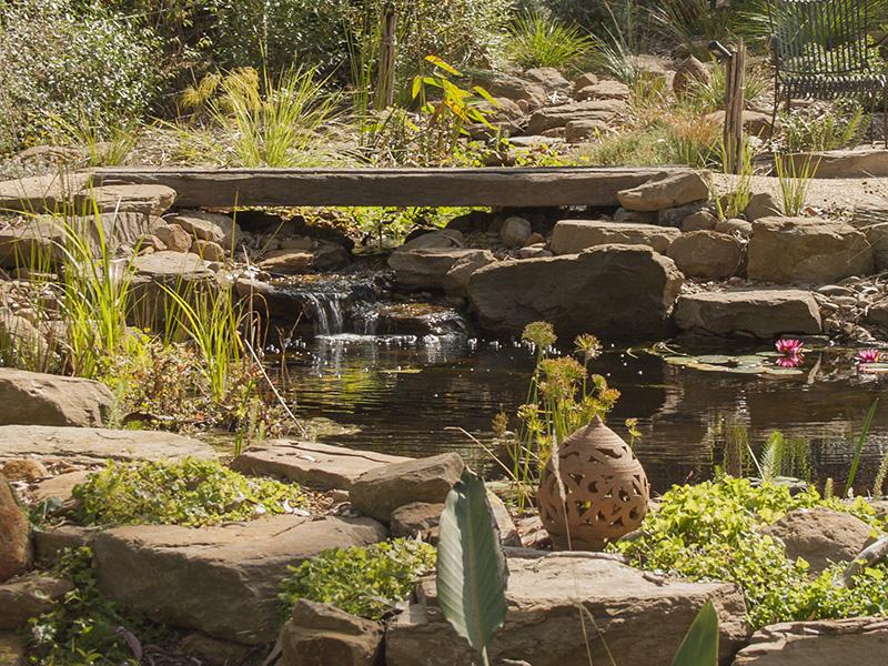 Stream entering the billabong in an Australian native garden