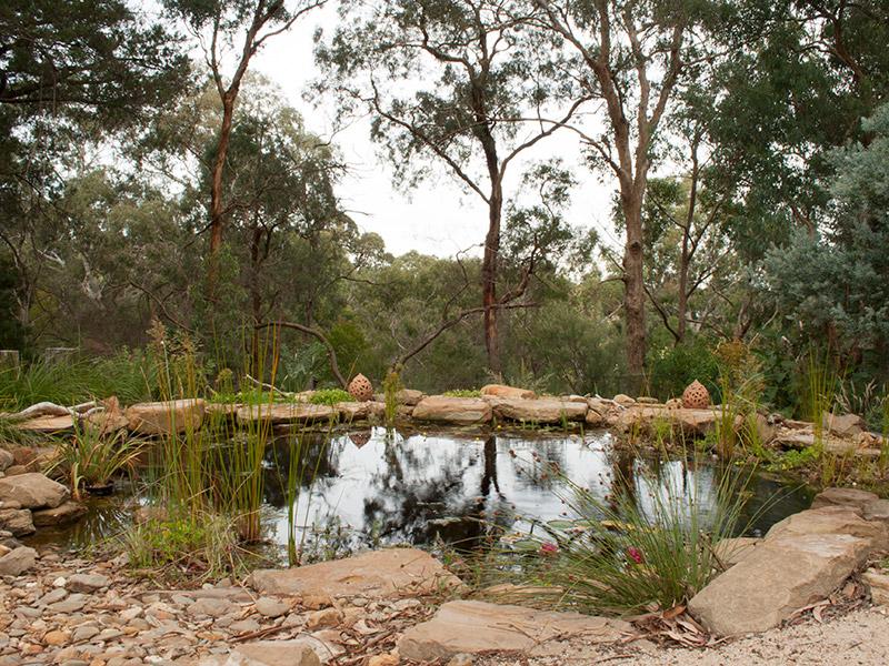 Billabong in Australian native garden