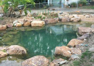 Ferntree Gully pond